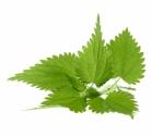 ortie-bio-recettes-piquante-purin-bienfaits-tisane-plante-soupe-cheveux-silice-blanche-piqure-antioxydant-naturel-bienfaits-30
